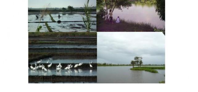 National Wetlands Action Plan
