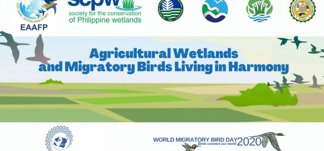 Agricultural Wetlands and Migratory Birds Living in Harmony